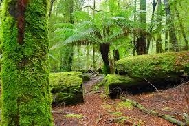 The Tarkine Wilderness – Tasmania